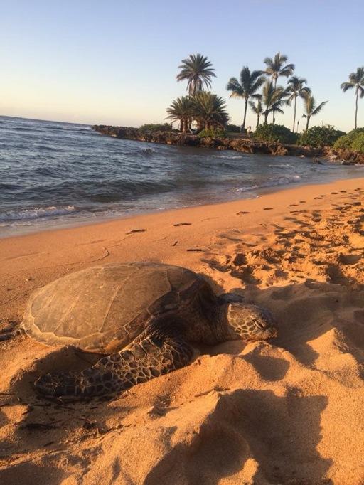 Praia de Haleiwa